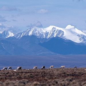 Trustees grew up protecting the Arctic Refuge