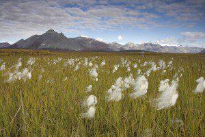 Arctic National Wildlife Refuge. USFWS Photo.