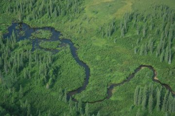 Aerial photo of Middle Creek, a tributary of the Chuitna River where PacRim hopes to remove all the water to extract coal. Photo courtesy of Alaskans First.