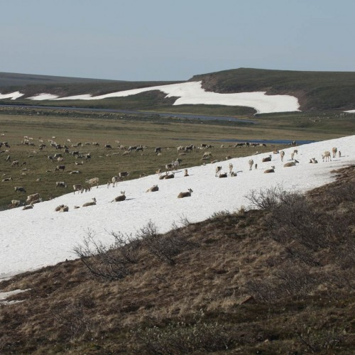 Protecting Alaska's Western Arctic