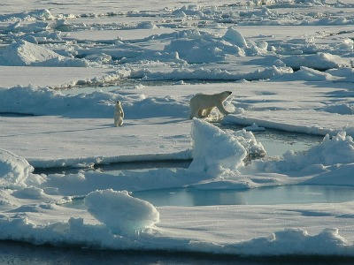 Polar bear and cub on first year ice floes in the Beaufort Sea. Photo: The Hidden Ocean, Arctic 2005 Exploration, NOAA/OAR/OER