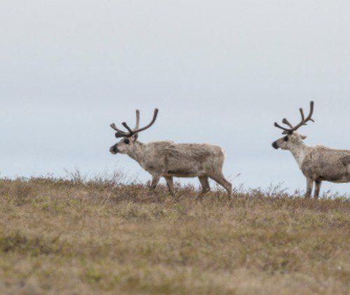Feds put pristine Arctic at risk