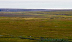 The Coastal Plain extends from the foothills of the Brooks Range to the Arctic Ocean. Photo courtesy of Vance Carruth.
