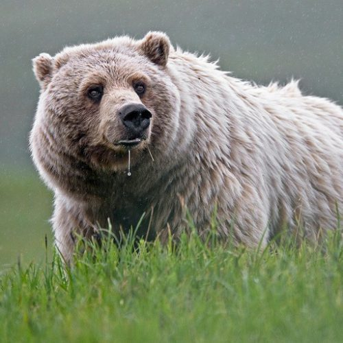 Conservation groups join lawsuits on predator control