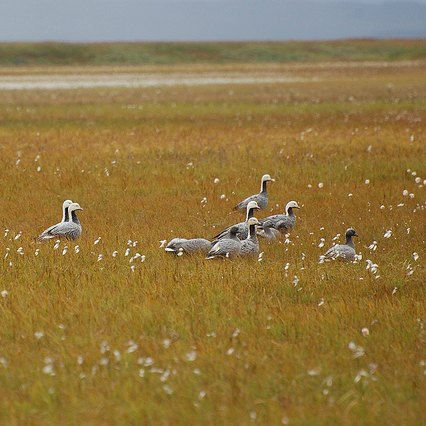 Interns on the issues: Can we co-exist with migratory birds?