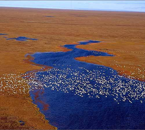 Breaking news: Congress uses budget to drill Arctic Refuge