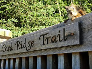 A squirrel peers over a trail head sign along Turnagain Arm, Alaska.