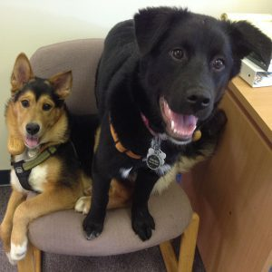 Chewy and Raven are dogs Michelle adopted and often spent the workweek at the office.
