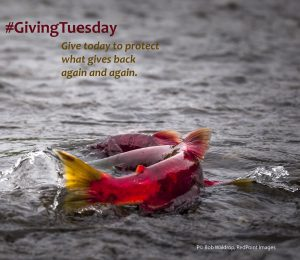 Join in on #givingTuesday to protect the wild