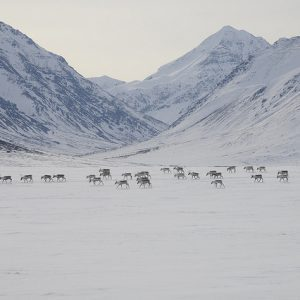 Proposed Ambler road threatens Arctic National Park and Preserve
