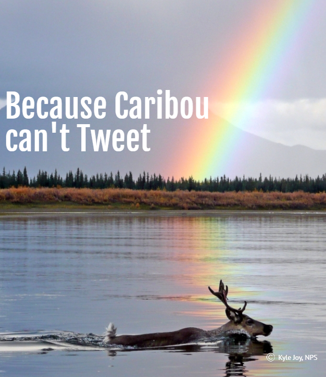 Because caribou swimming under a rainbow can't tweet, we're looking for a digital communications manager who can.