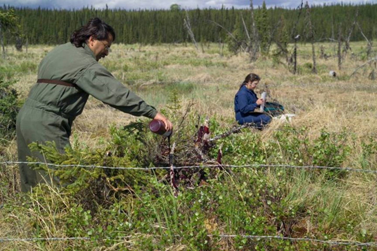 The island life of Kenai brown bears means they rely entirely on their own procreation to survive as a population, and that has become a challenge with so many people moving into the area.